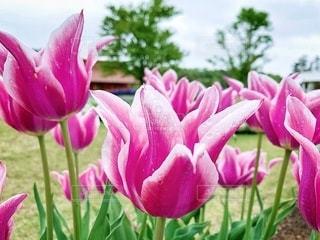 花と風景の写真・画像素材[2080211]