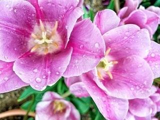 花のアップの写真・画像素材[2080213]