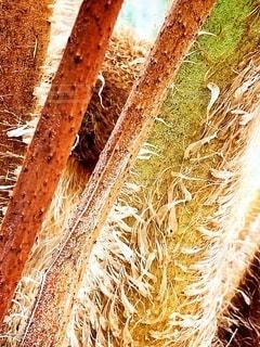 干し草みたいな木のアップの写真・画像素材[2080258]