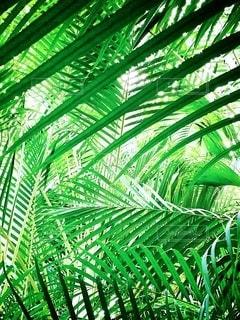 常夏のジャングルの中にいるような…の写真・画像素材[2080263]