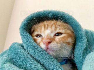 猫の写真・画像素材[2593821]