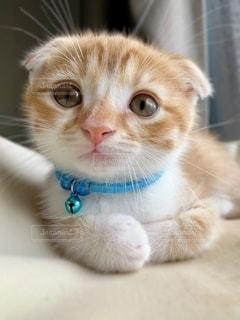 猫の写真・画像素材[2643151]