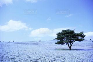 青の世界の写真・画像素材[2073827]