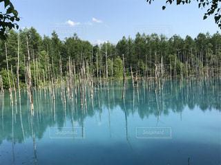 北海道 青い池の写真・画像素材[2065030]