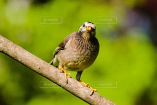 木の枝にとまる小鳥の写真・画像素材[2083366]