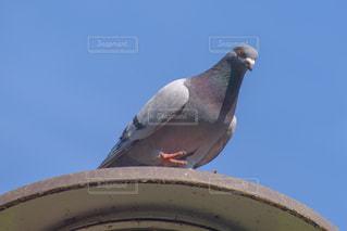 街灯のうえの鳩の写真・画像素材[2083578]