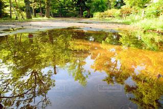 水溜りに反射する新緑の写真・画像素材[2092334]