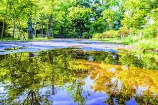 水溜りの新緑の写真・画像素材[2105028]
