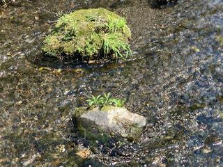 源兵衞川の苔むす岩の写真・画像素材[2131173]