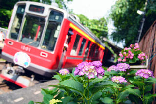 紫陽花と登山鉄道の写真・画像素材[2142608]