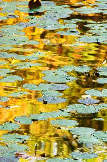 蓮池の風景の写真・画像素材[2149909]