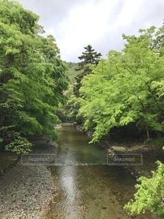 緑と川の写真・画像素材[4528900]