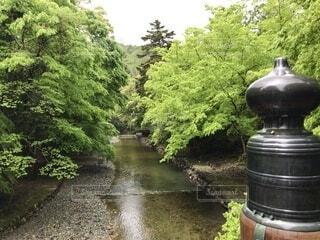 緑と川と橋の写真・画像素材[4528907]