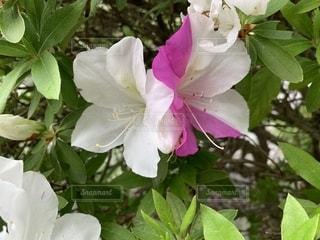 花の写真・画像素材[2089808]