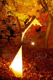 灯りと紅葉の写真・画像素材[2078702]
