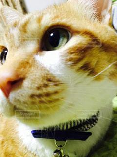綺麗な目のネコの写真・画像素材[2092681]
