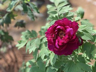 花の写真・画像素材[2071904]