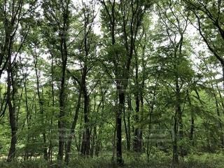 森林の中の写真・画像素材[2096569]