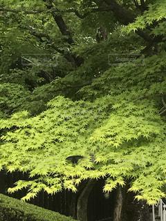 新緑の頃の写真・画像素材[2075181]