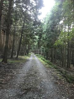 林道の写真・画像素材[2075199]