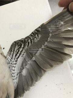 タシギの羽の写真・画像素材[2075245]
