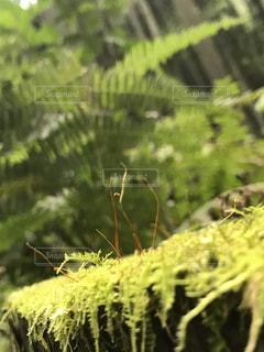 苔の写真・画像素材[2075272]