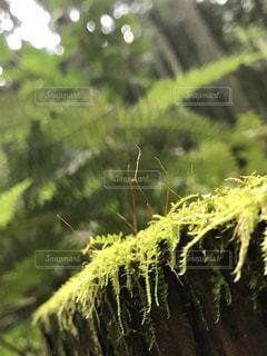 苔むした木の写真・画像素材[2075273]