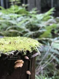 苔むした木とキノコの写真・画像素材[2075274]