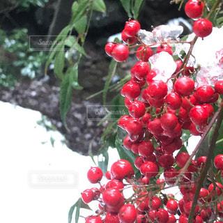 赤い果実のグループの写真・画像素材[2109925]
