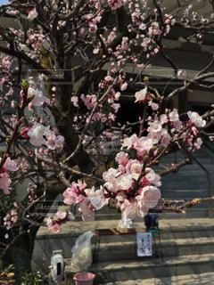 花 - No.572536
