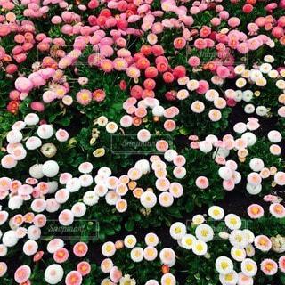お花畑 - No.78636