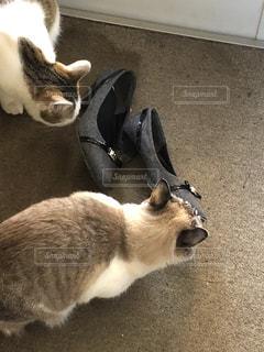 靴が臭いらしい。。の写真・画像素材[2075080]