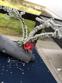 近くの花のアップの写真・画像素材[2078143]