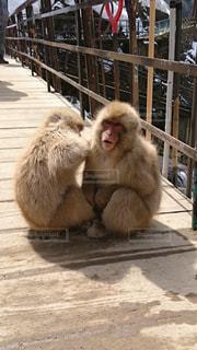 木製フェンスの上に座っている猿の写真・画像素材[2078276]