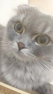 近くにカメラを見て猫のアップの写真・画像素材[2078278]