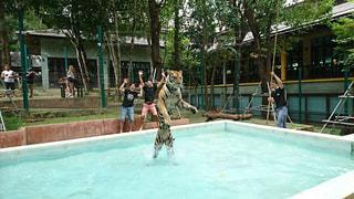 水のプールの虎の写真・画像素材[2078279]
