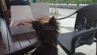 犬の写真・画像素材[2234939]