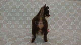 犬の写真・画像素材[2234941]