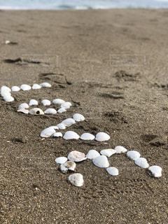 貝殻のラブの写真・画像素材[2237840]