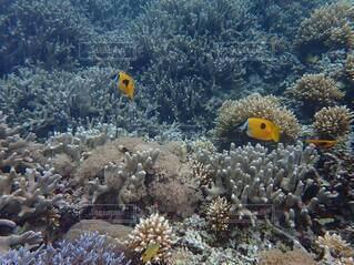 沖縄の海の写真・画像素材[4043048]