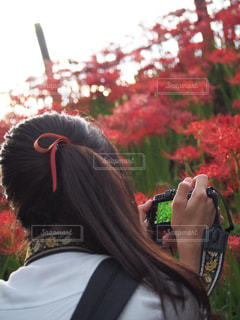 女性の写真・画像素材[227424]