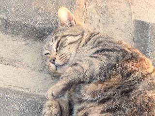 猫の写真・画像素材[294912]