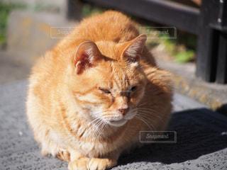 No.314151 猫