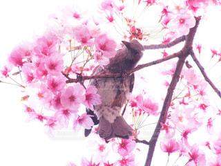 春の写真・画像素材[413104]