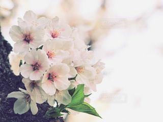 春の到来の写真・画像素材[1086396]