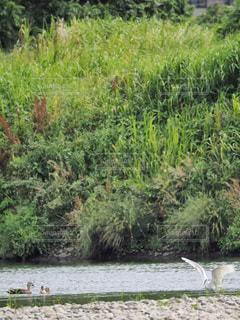 水の体の横にあるツリーの写真・画像素材[1227967]