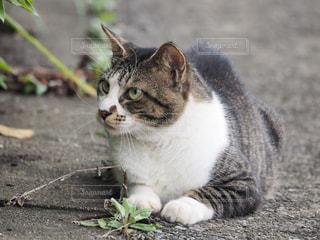座り猫の写真・画像素材[1379151]
