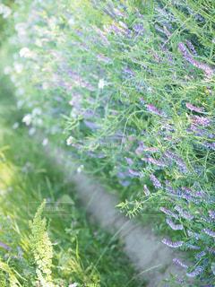 緑の植物の写真・画像素材[2100597]