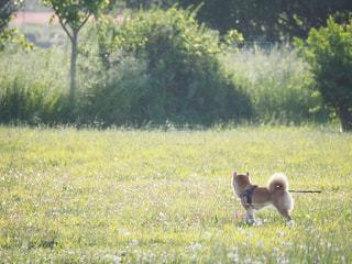 知り合いdogの写真・画像素材[2100598]