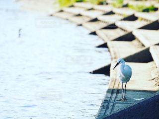 水の体の上に座る鳥の写真・画像素材[2204690]